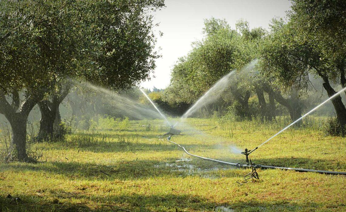 elettropompe-per-irrigazione-olive